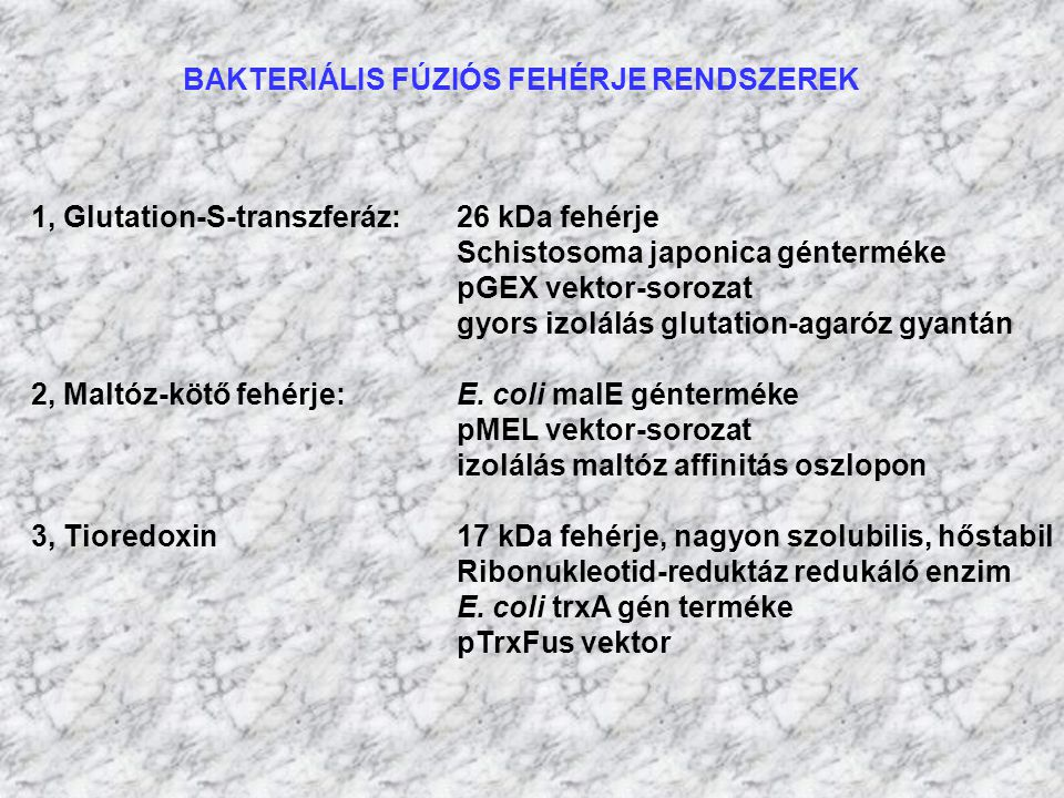 BAKTERIÁLIS FÚZIÓS FEHÉRJE RENDSZEREK
