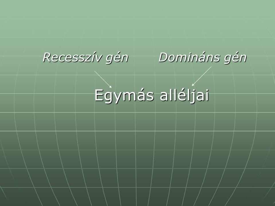 Recesszív gén Domináns gén