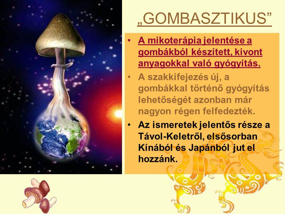 """""""GOMBASZTIKUS A mikoterápia jelentése a gombákból készített, kivont anyagokkal való gyógyítás."""