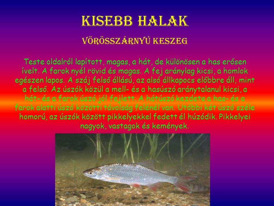 Kisebb halak Vörösszárnyú keszeg