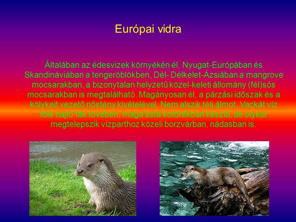 Európai vidra