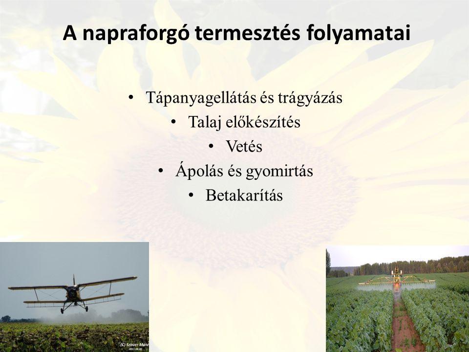A napraforgó termesztés folyamatai