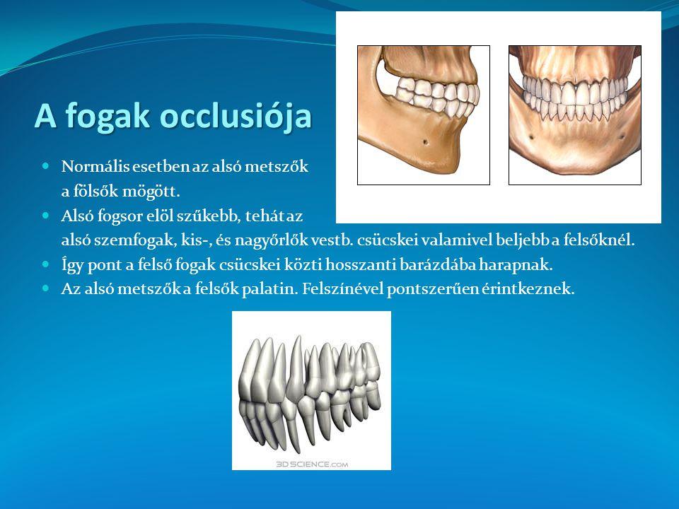 A fogak occlusiója Normális esetben az alsó metszők a fölsők mögött.