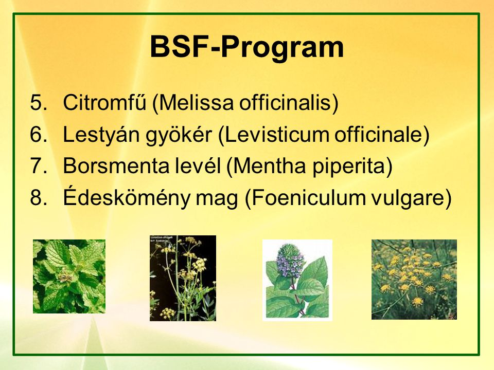 BSF-Program Citromfű (Melissa officinalis)