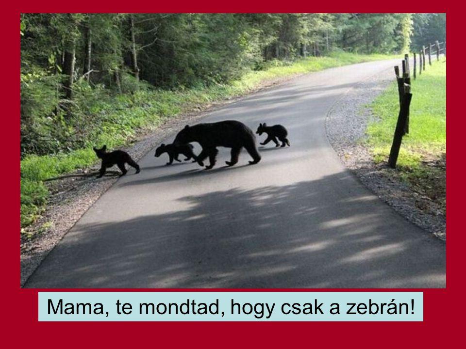 Mama, te mondtad, hogy csak a zebrán!