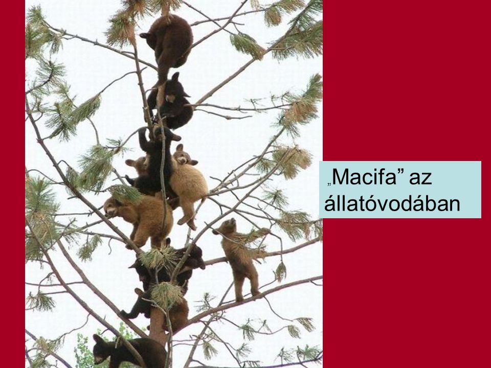 """""""Macifa az állatóvodában"""