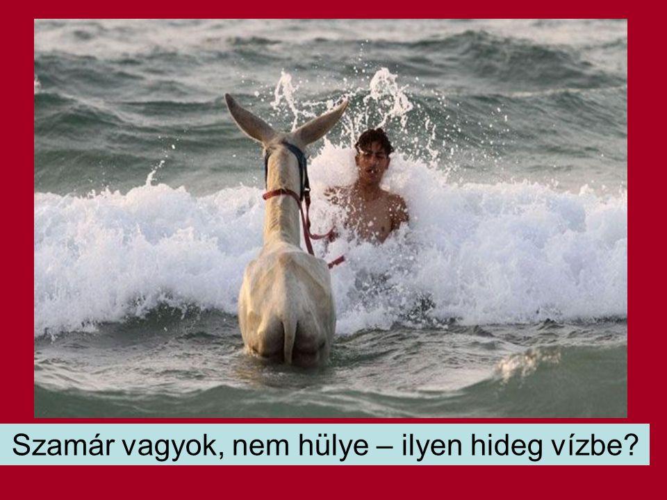 Szamár vagyok, nem hülye – ilyen hideg vízbe