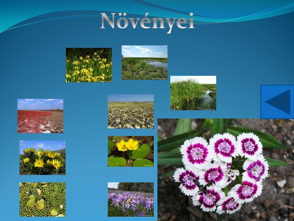 Növényei