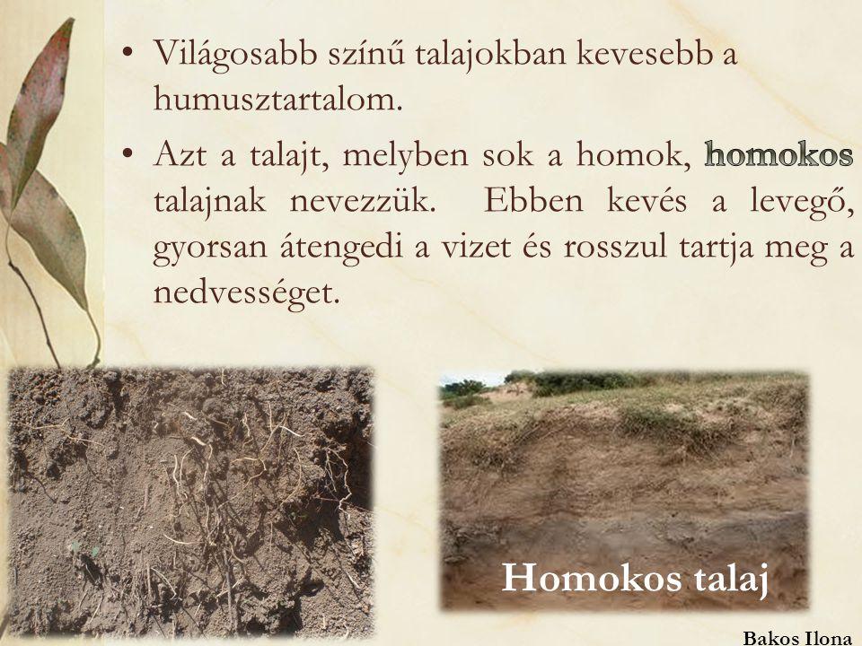 Homokos talaj Világosabb színű talajokban kevesebb a humusztartalom.