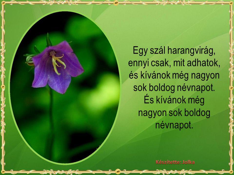 Egy szál harangvirág, ennyi csak, mit adhatok, és kívánok még nagyon sok boldog névnapot. És kívánok még nagyon sok boldog névnapot.