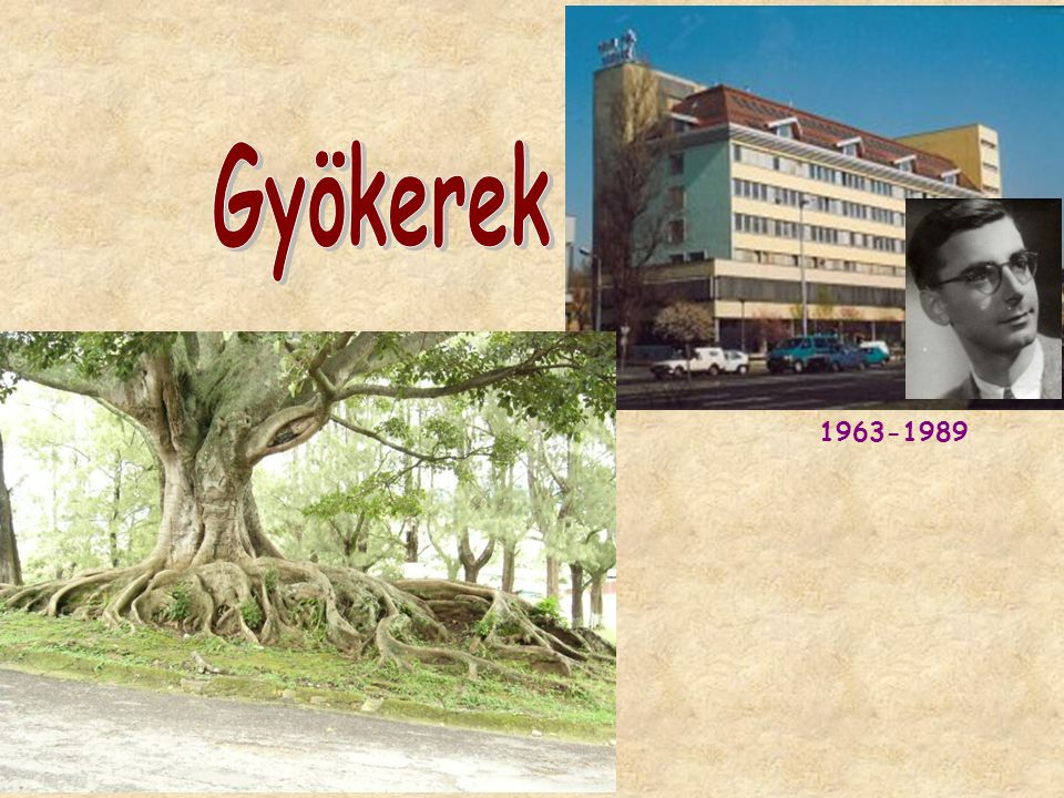 Gyökerek 1963-1989