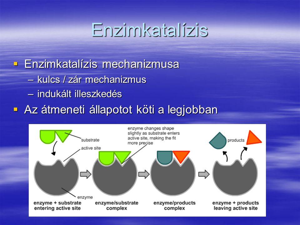 Enzimkatalízis Enzimkatalízis mechanizmusa