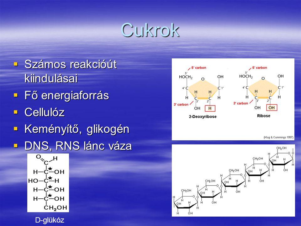 Cukrok Számos reakcióút kiindulásai Fő energiaforrás Cellulóz