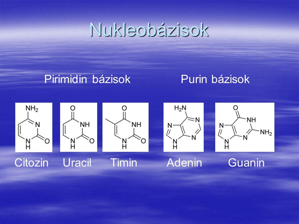 Nukleobázisok Pirimidin bázisok Purin bázisok Citozin Uracil Timin
