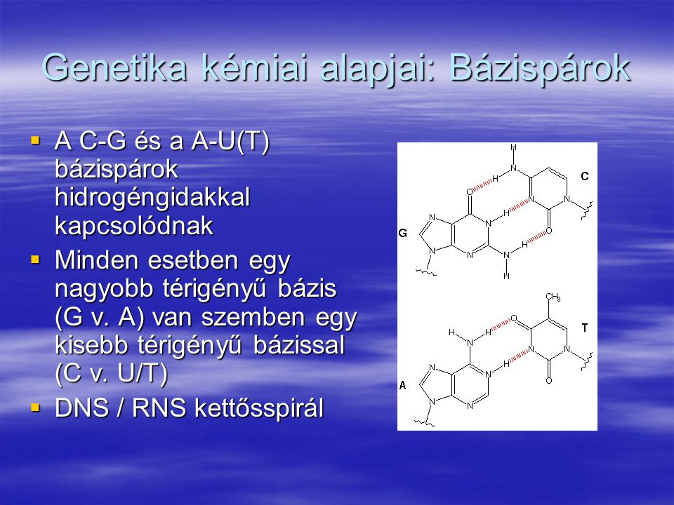 Genetika kémiai alapjai: Bázispárok