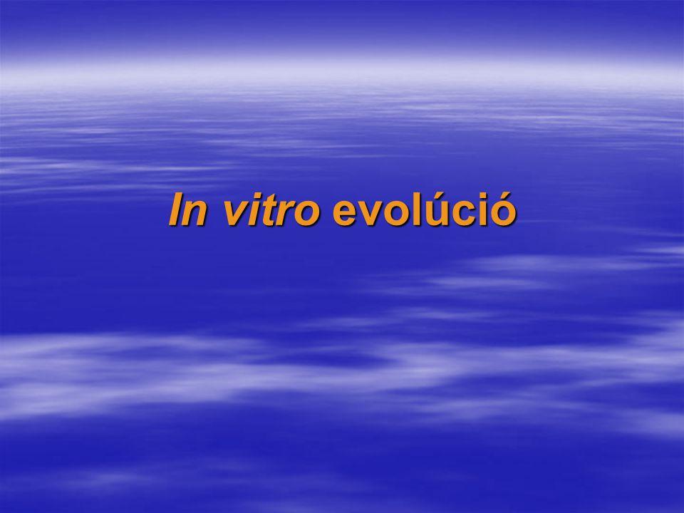 In vitro evolúció