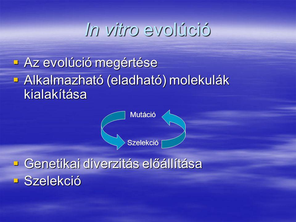 In vitro evolúció Az evolúció megértése