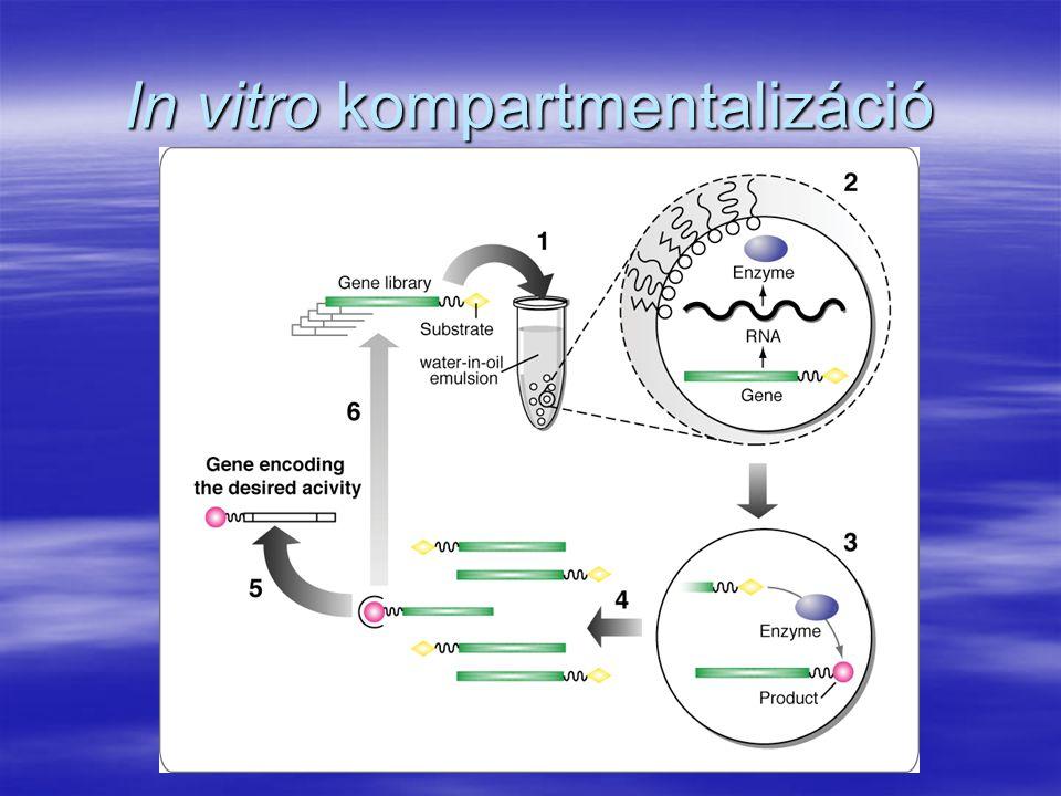 In vitro kompartmentalizáció