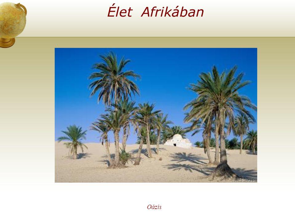Élet Afrikában Illesszen be egy térképet az országról. Oázis