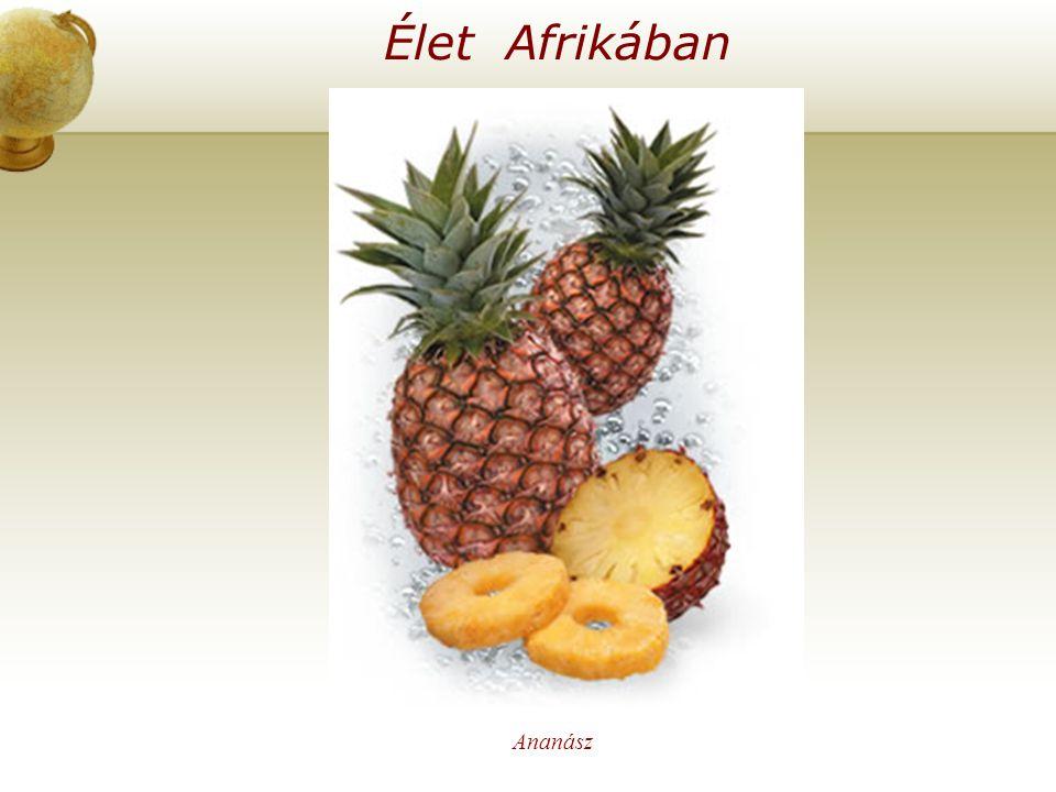 Élet Afrikában Illesszen be egy térképet az országról. Ananász