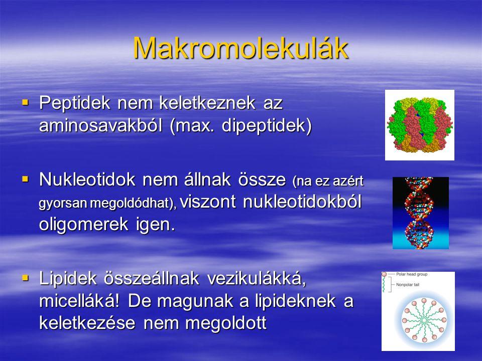 Makromolekulák Peptidek nem keletkeznek az aminosavakból (max. dipeptidek)