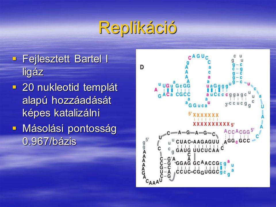 Replikáció Fejlesztett Bartel I ligáz