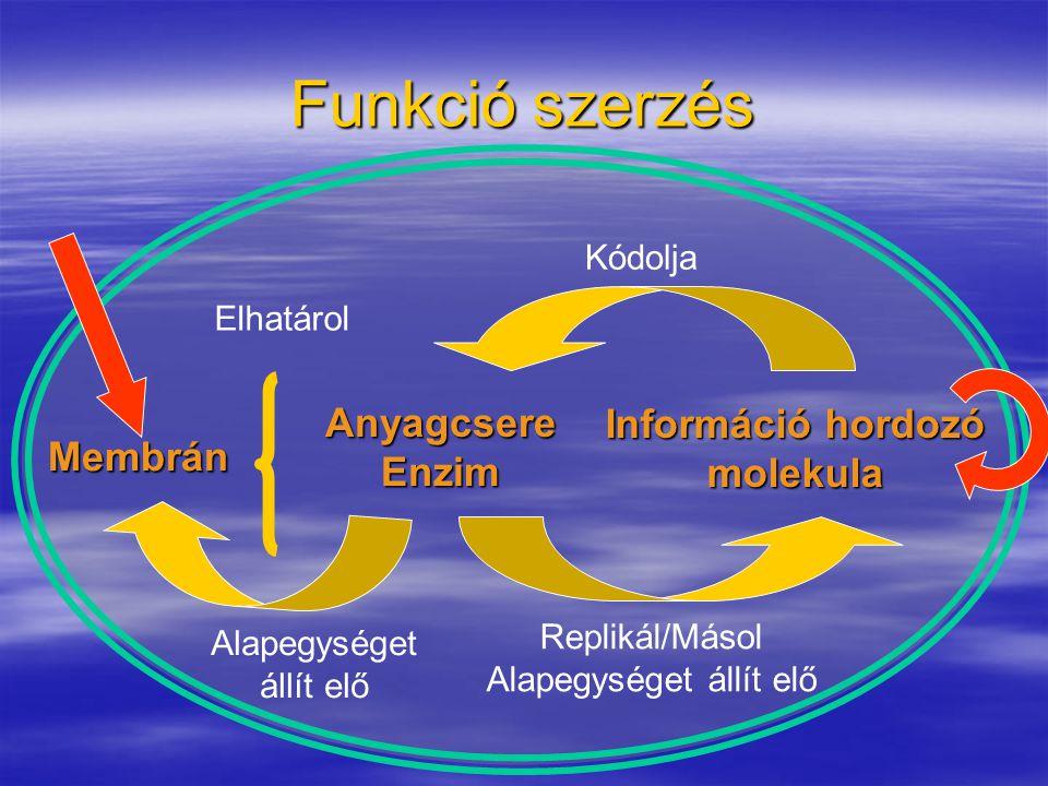 Információ hordozó molekula