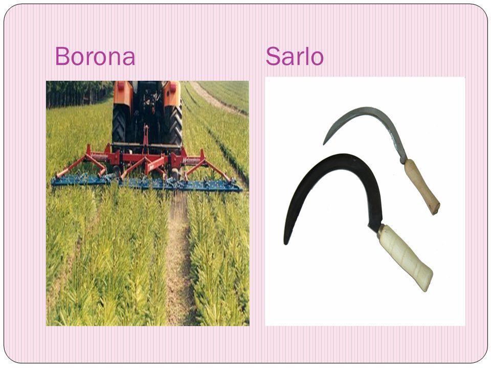 Borona Sarlo