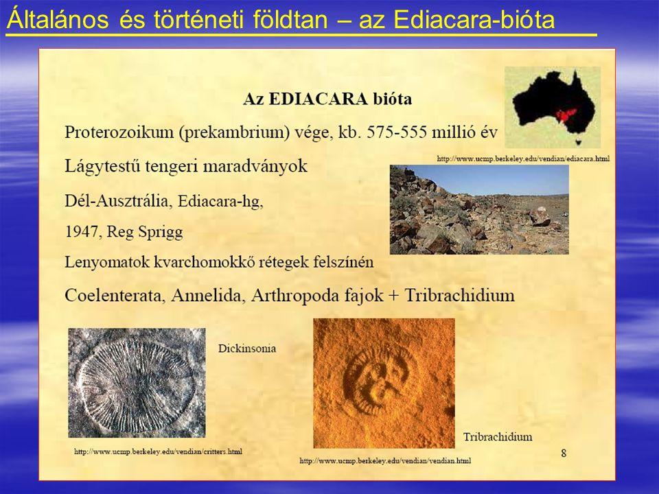 Általános és történeti földtan – az Ediacara-bióta