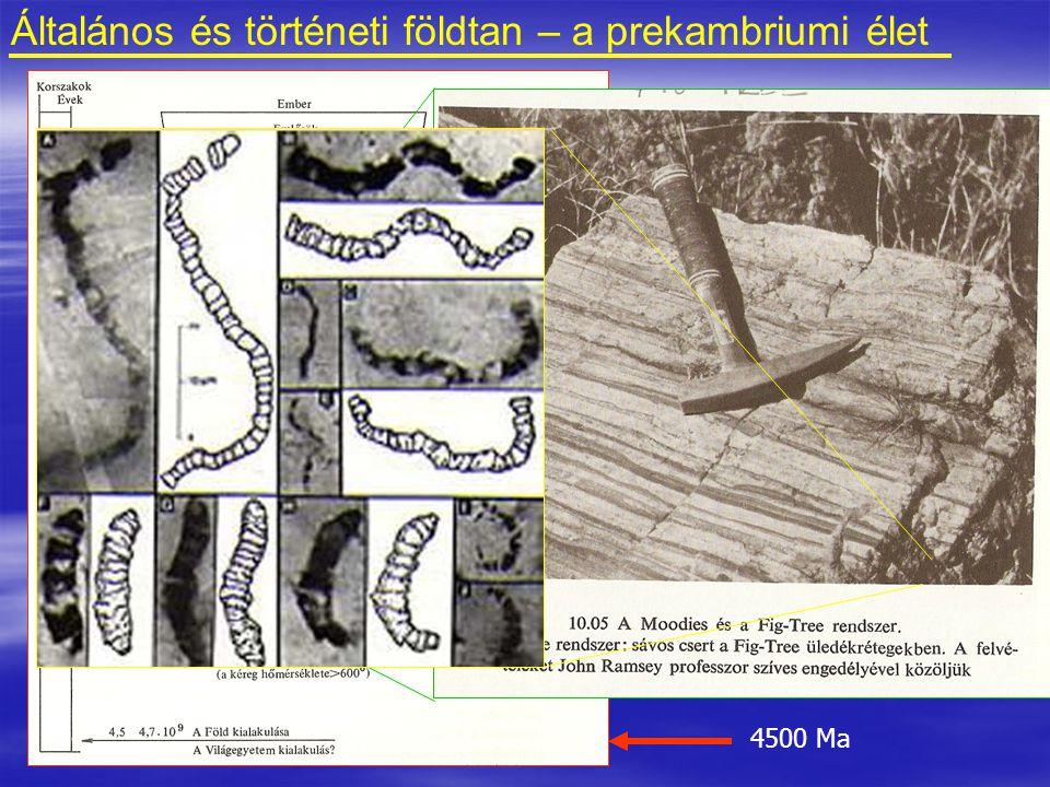 Általános és történeti földtan – a prekambriumi élet
