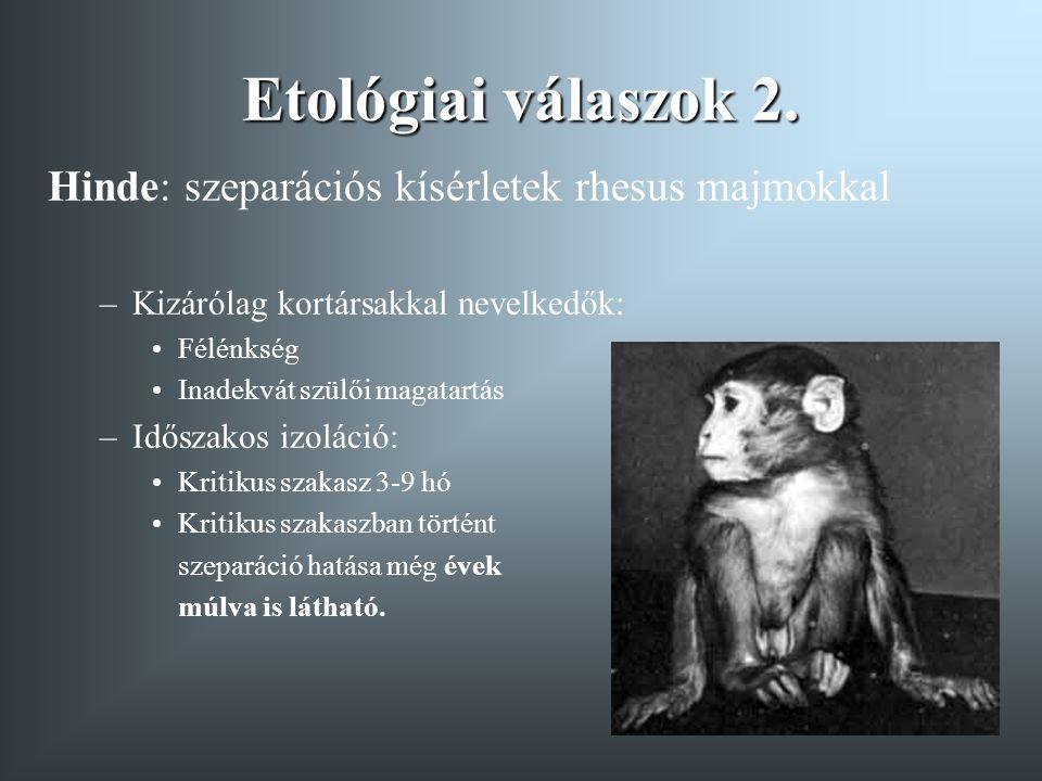 Etológiai válaszok 2. Hinde: szeparációs kísérletek rhesus majmokkal