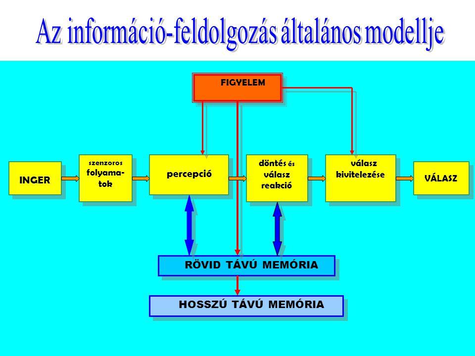 szenzoros folyama-tok