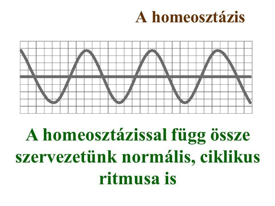 A homeosztázis A homeosztázissal függ össze szervezetünk normális, ciklikus ritmusa is
