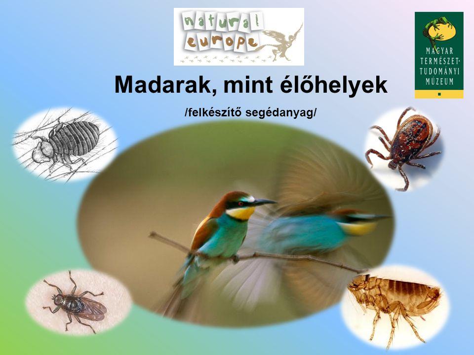 Madarak, mint élőhelyek /felkészítő segédanyag/