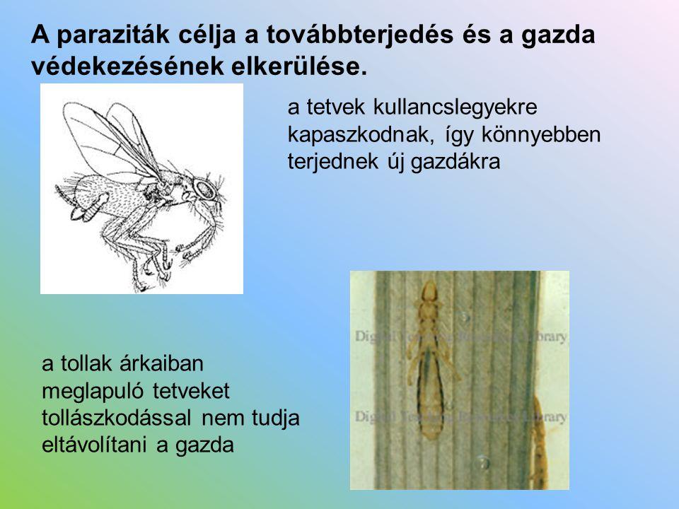 A paraziták célja a továbbterjedés és a gazda védekezésének elkerülése.