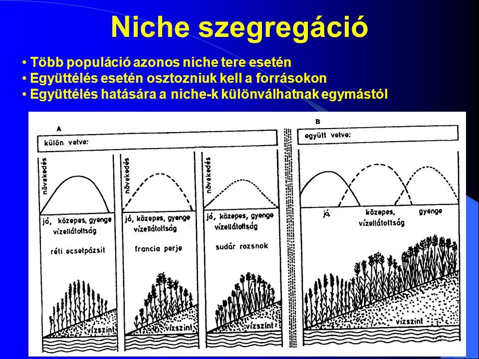 Niche szegregáció Több populáció azonos niche tere esetén