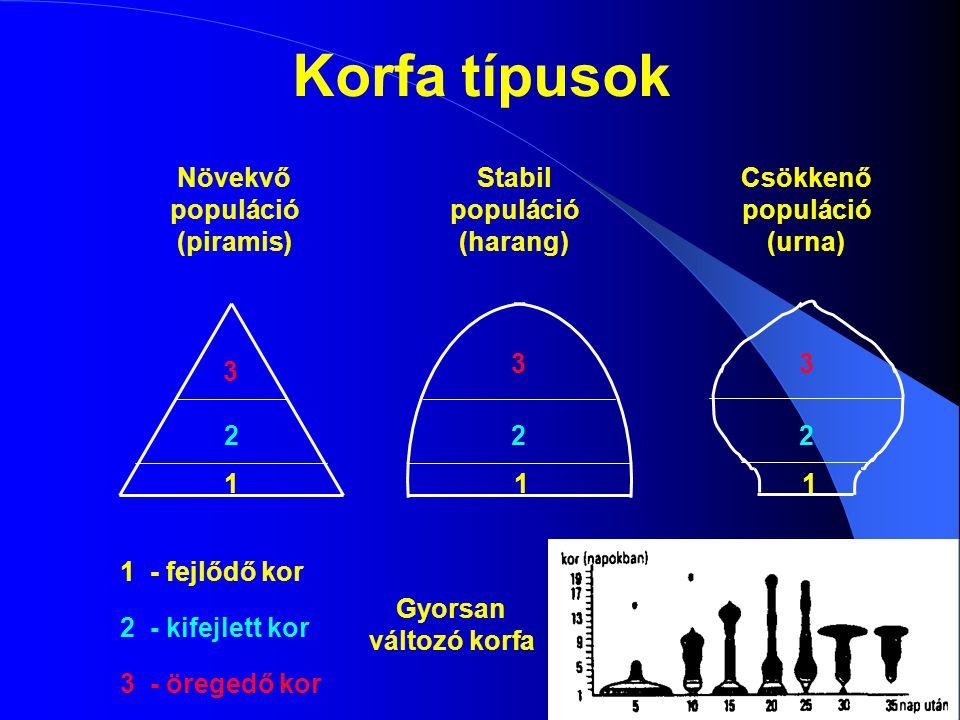 Korfa típusok Növekvő populáció (piramis) Stabil populáció (harang)