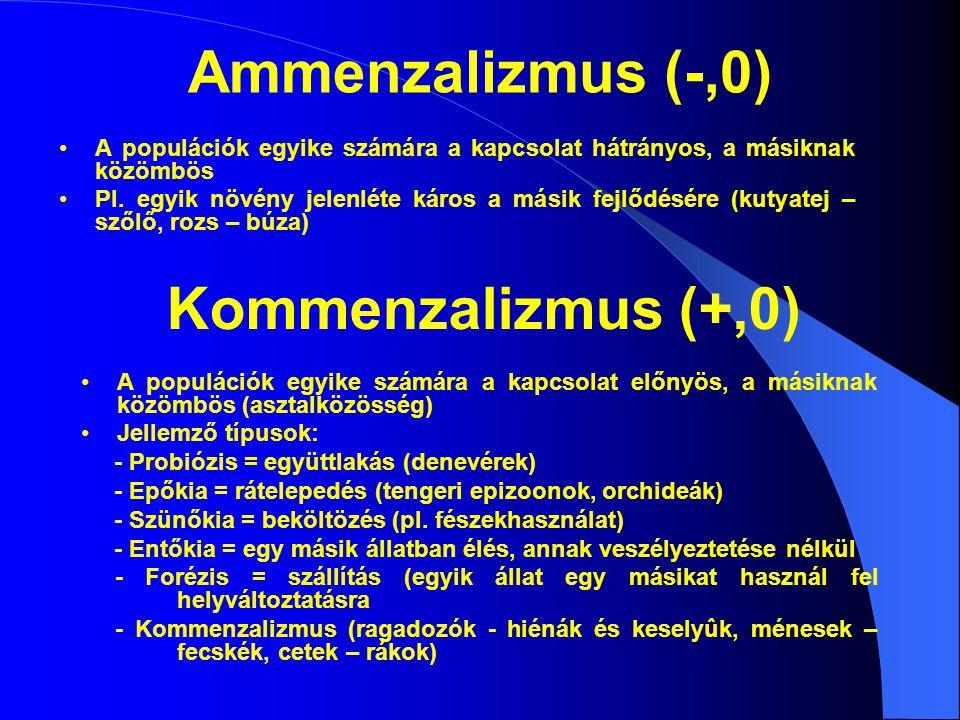 Ammenzalizmus (-,0) Kommenzalizmus (+,0)