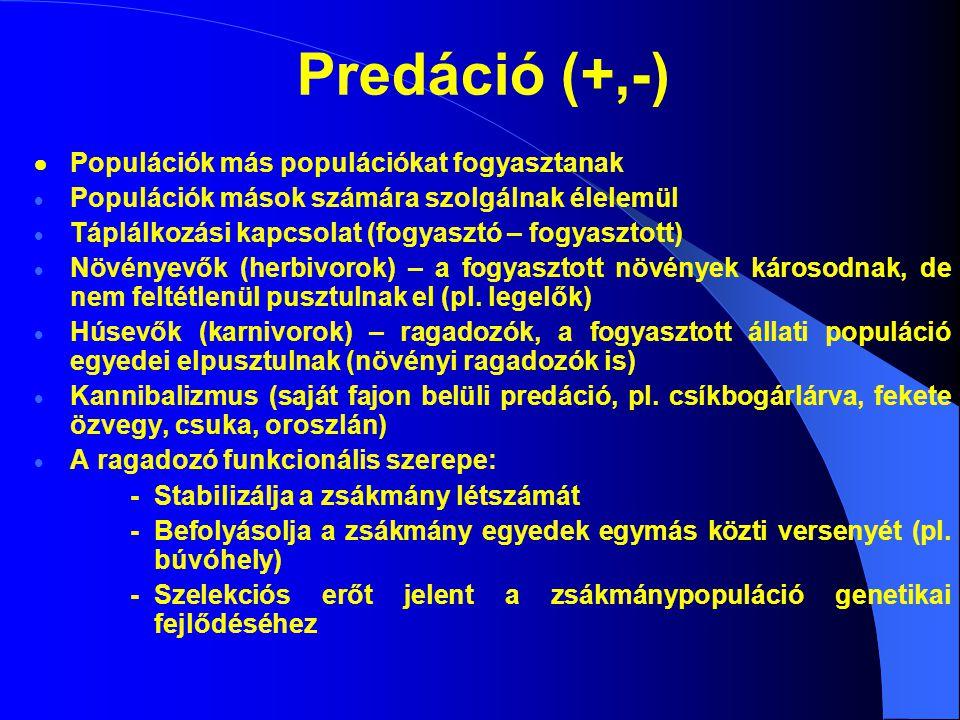 Predáció (+,-)  Populációk más populációkat fogyasztanak