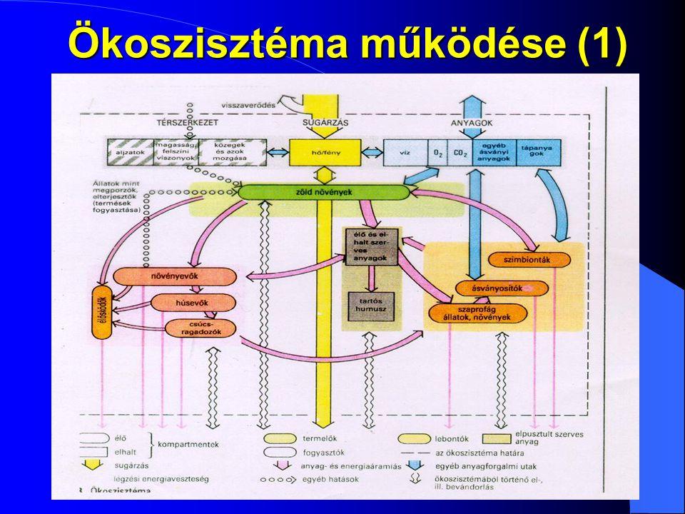 Ökoszisztéma működése (1)