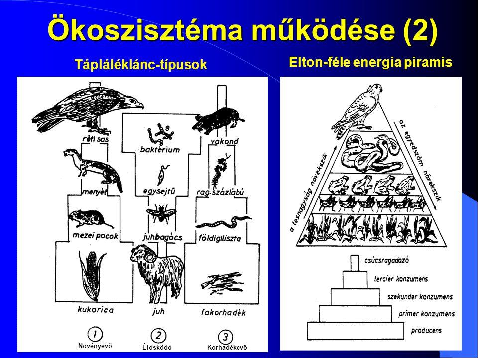Ökoszisztéma működése (2)