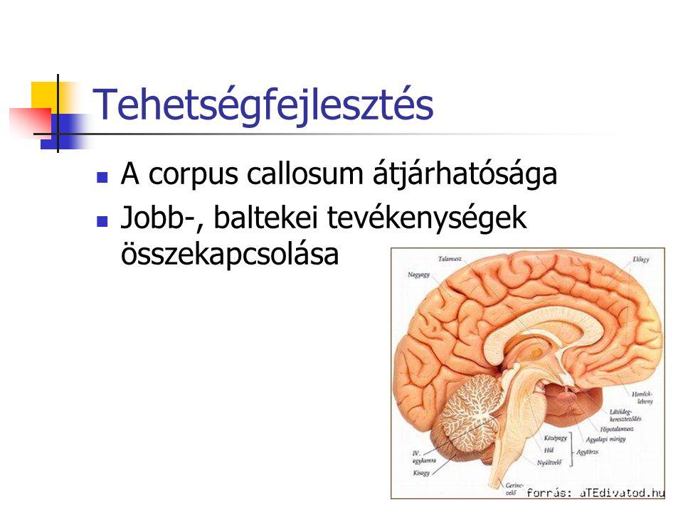Tehetségfejlesztés A corpus callosum átjárhatósága
