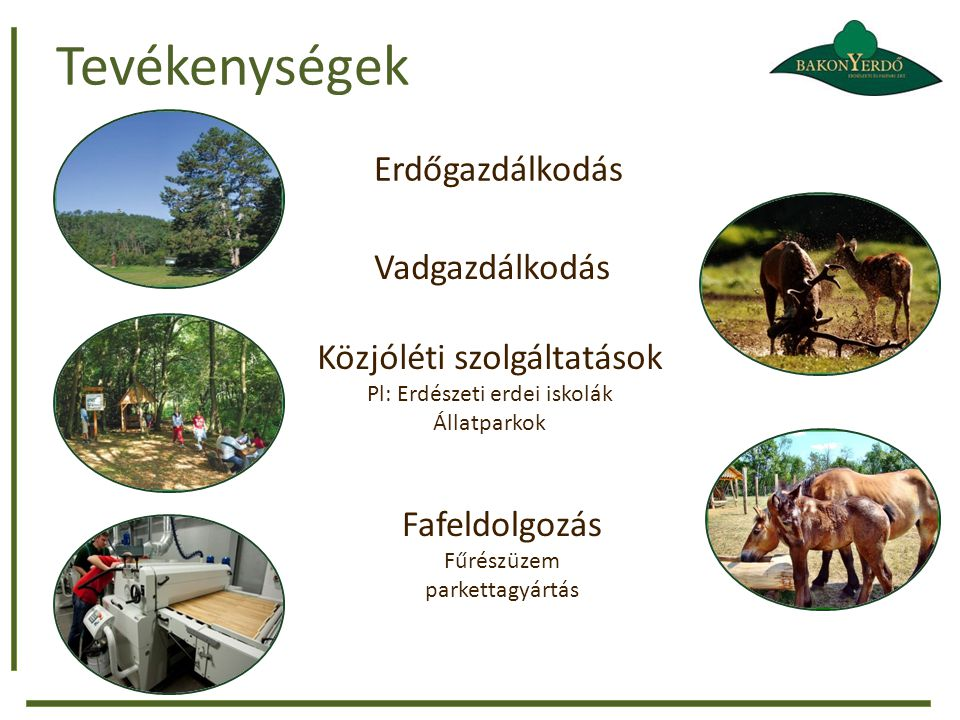 Tevékenységek Erdőgazdálkodás Vadgazdálkodás Közjóléti szolgáltatások