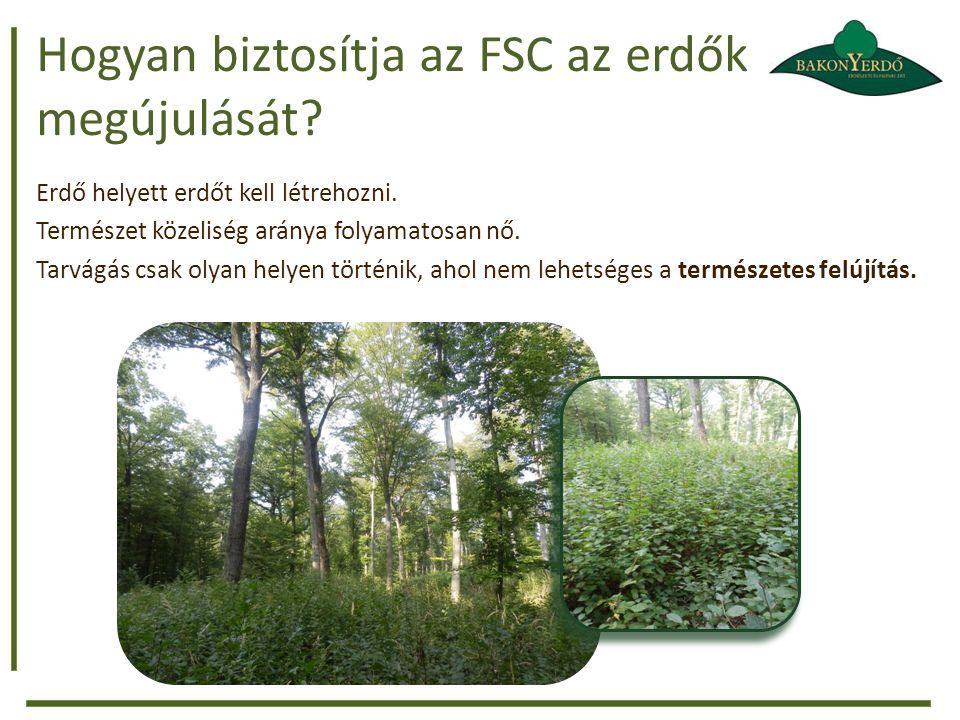 Hogyan biztosítja az FSC az erdők megújulását