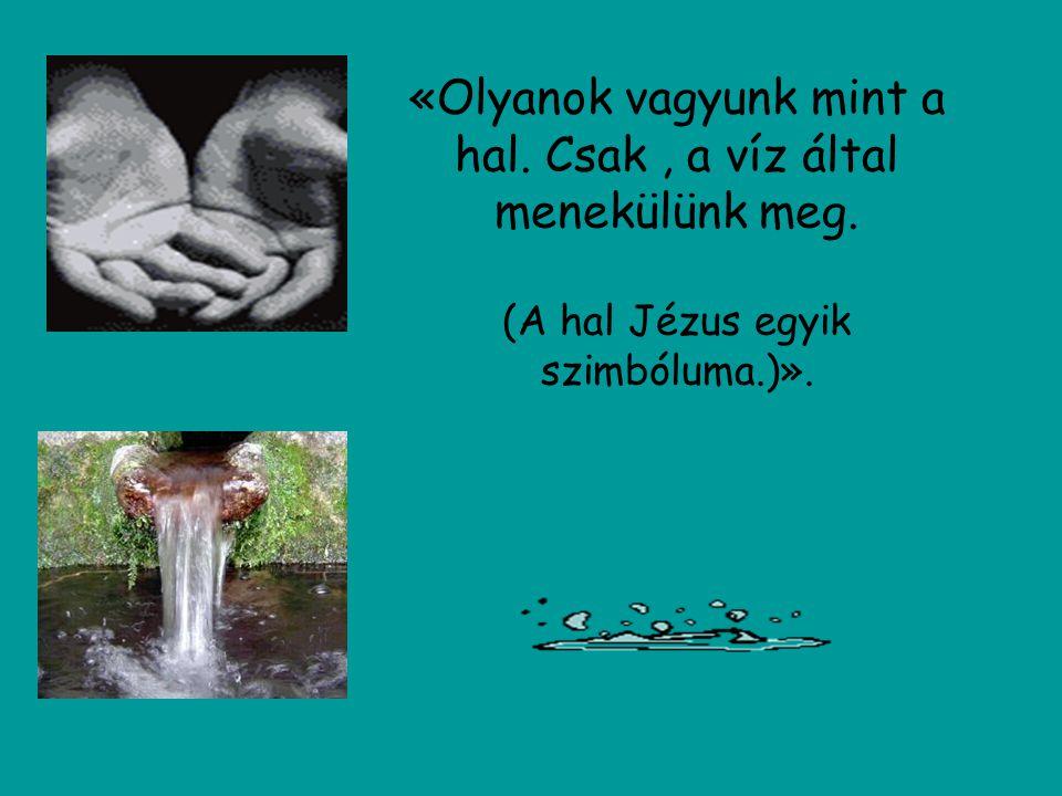 «Olyanok vagyunk mint a hal. Csak , a víz által menekülünk meg.