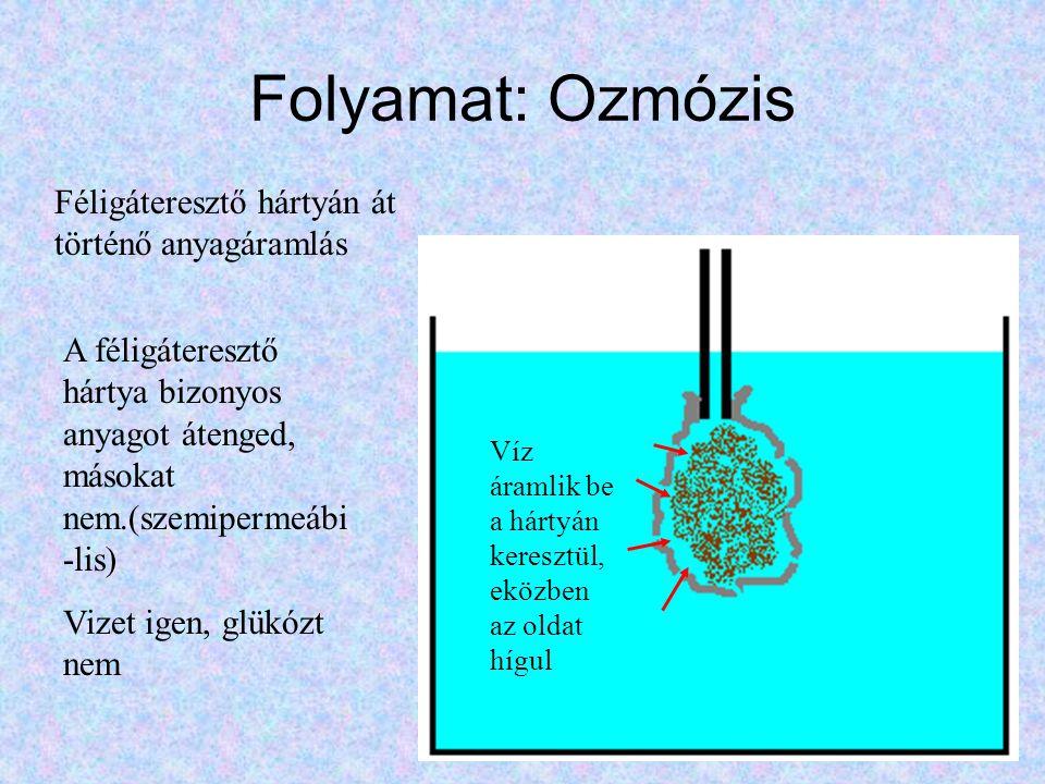 Folyamat: Ozmózis Féligáteresztő hártyán át történő anyagáramlás