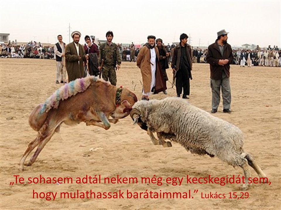 """""""Te sohasem adtál nekem még egy kecskegidát sem, hogy mulathassak barátaimmal. Lukács 15,29"""