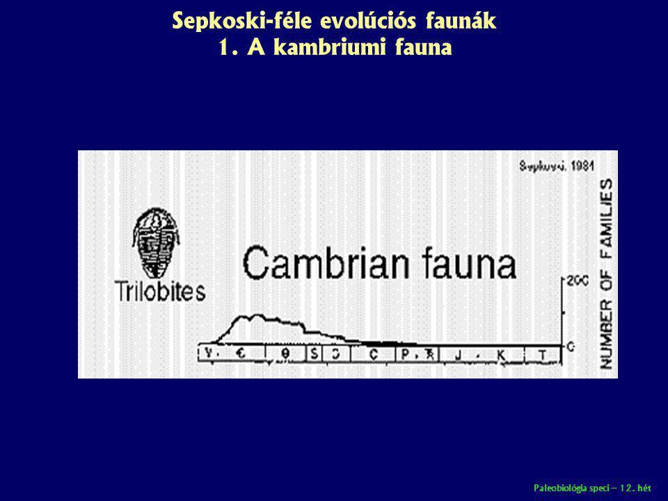 Sepkoski-féle evolúciós faunák 1. A kambriumi fauna