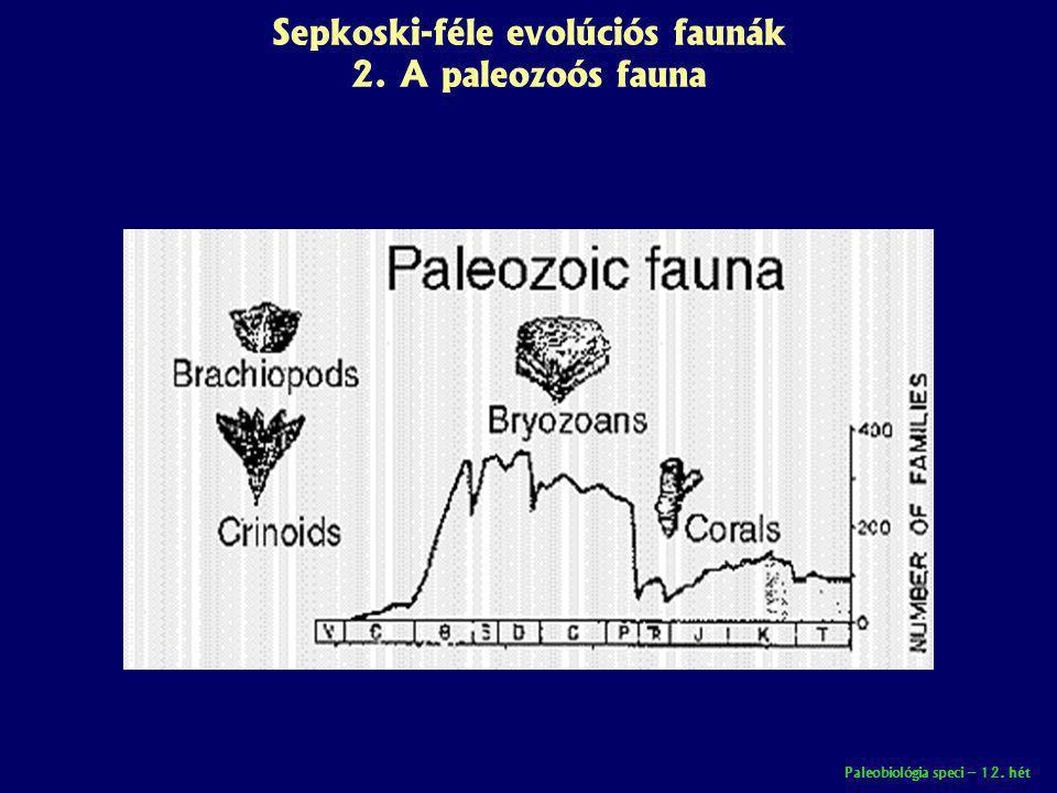 Sepkoski-féle evolúciós faunák 2. A paleozoós fauna