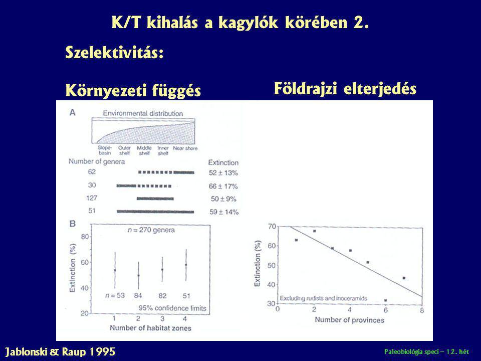 K/T kihalás a kagylók körében 2.
